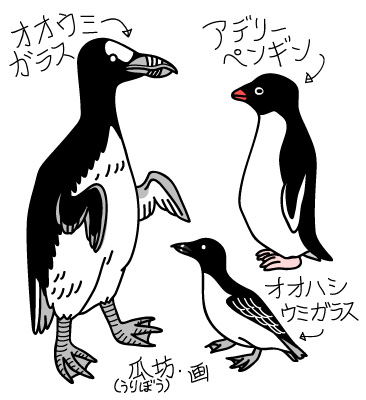 pinguin_manchot.jpg